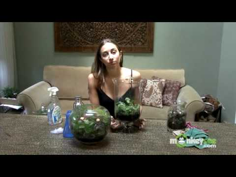 Caring For Your Terrarium Youtube