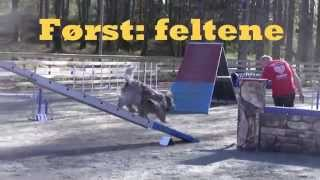 Dog Agility Training Before A Competition - Schapendoes