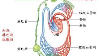 基礎生物3 1 02人體的循環系統 血液與淋巴一博