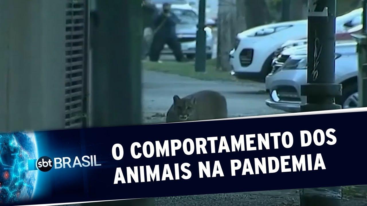 Isolamento social evidencia o impacto do ser humano na natureza | SBT Brasil (22/04/20)