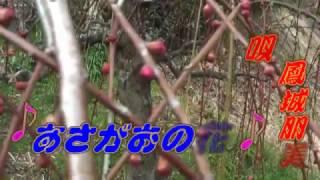 月ヶ瀬の梅祭りが始まりますそれのオープニングセレモニーです 梅の名所...