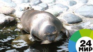 Тюленята, встречающие весну на балтийском берегу, умилили прохожих - МИР 24