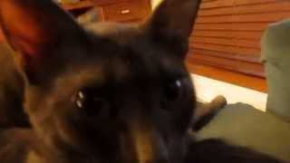 Vlog 1- Introducing Half of My Pets!