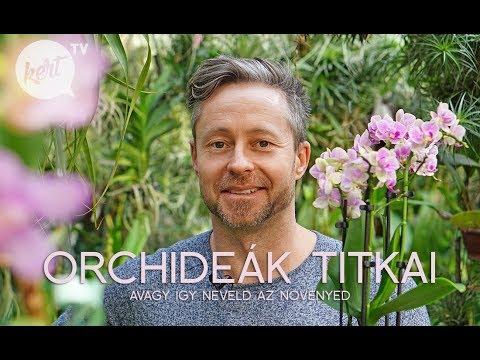 Download Igy neveld az orchideád - avagy a virágzás titka