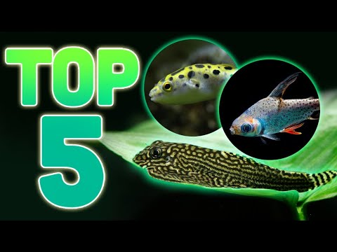 MY TOP 5 ODDBALL FISH FOR YOUR AQUARIUM