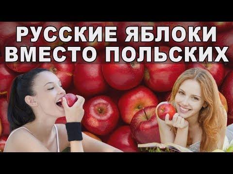 Яблоки России. Мировой рынок яблок.