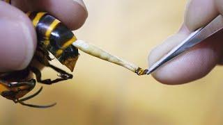 Почему Пчелы Умирают После Укуса?