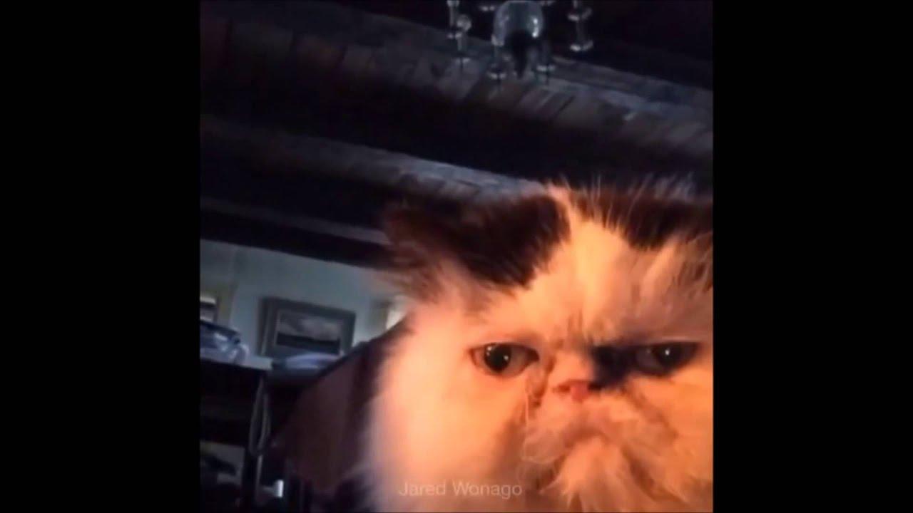Diabetes Gif Cat