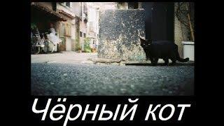 Чёрный кот. Авторская песня под гитару.