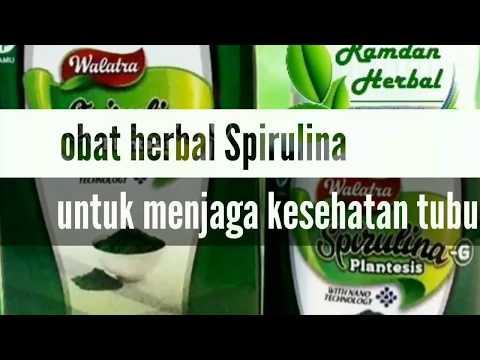"""obat-penggemuk-herbal-aman-manfaat-obat-herbal-alami-spirulina-plantesis-walatra-""""segudang-manfaat"""""""