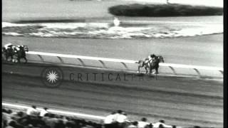 Horse named Honey Delaby wins the Sunset Handicap Race in Inglewood, California. HD Stock Footage