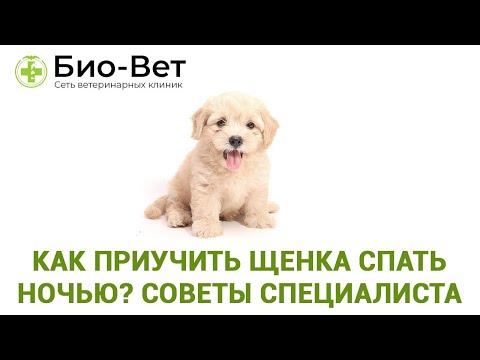 Как приучить щенка спать ночью ��// Советы Ветеринара // Сеть Ветклиник Био-Вет