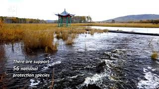 Nanwenghe Nature Reserve. China