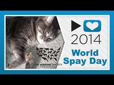 HSUS - World Spay Day   #p4a 2014