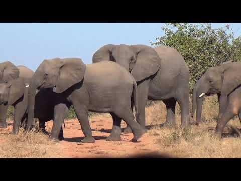 Gonarezhou National Park, Zimbabwe
