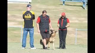 WGSDCA IPO Dogsport