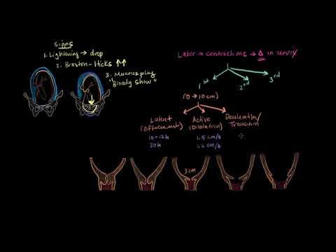 Лекции по акушерству и гинекологии. Физиология родов