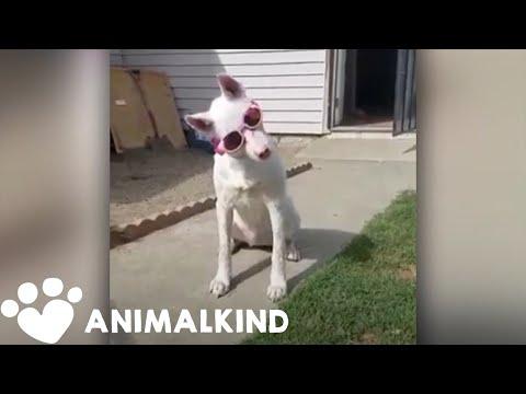 Maverick - My favorite animal story of the week!