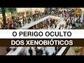 O Perigo Oculto dos Xenobióticos