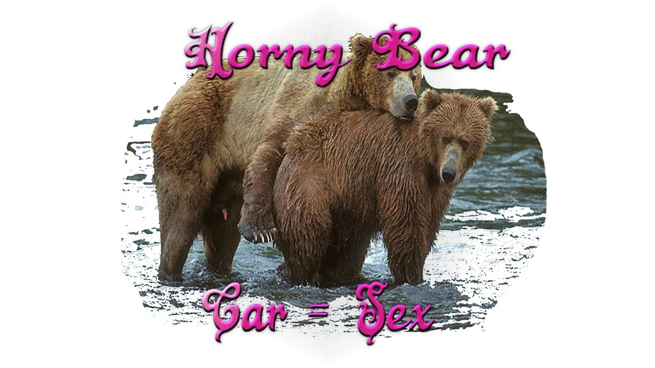 Bear porm