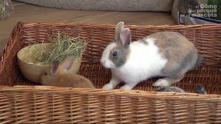 TRIKI I PORADY – Siano. Niezbędne dla królików i gryzoni.