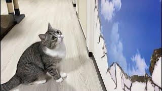 壁にトリックアートを貼ったら猫がこうなりました笑