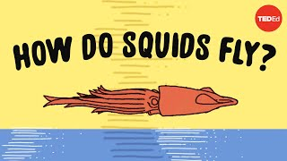 These squids can fly... no, really - Robert Siddall