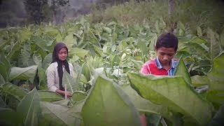 Alternative livelihood for tobacco farmers in South-East Asia