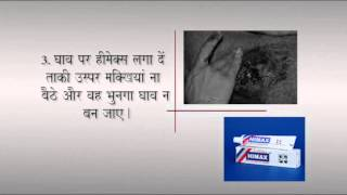 First Aid For Wounds In Dogs Hindi Video