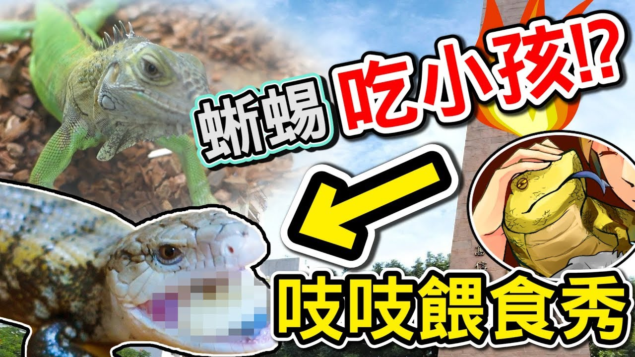 【蘇皮】蜥蜴居然會吃小孩!?首次蜥蜴餵食秀!! - YouTube