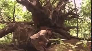 Десантный батя (3 серия из 8) Военный фильм.