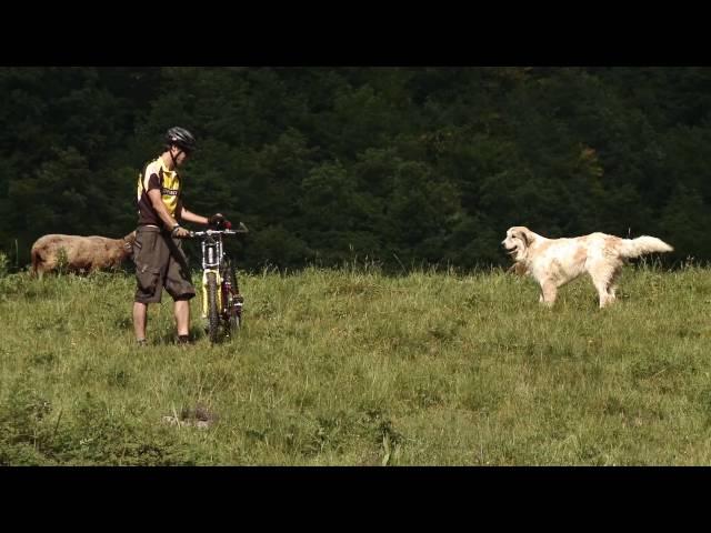 herdenschutzhunde in not facebook