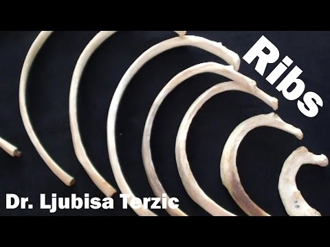 Human Anatomy Video: Ribs - Typical & Atypical, True & False Ribs