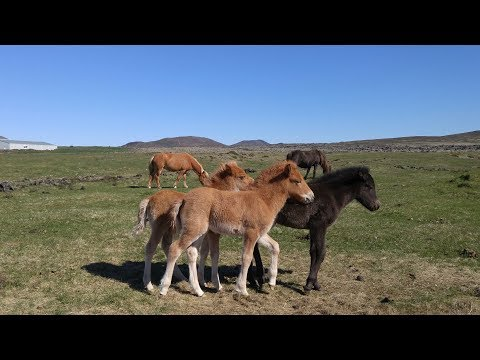 [Teaser 6 - Icelandic Horses and Truck] Project Wanderer - Iceland 2017