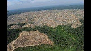 СТРИЖКА ТОЛЬКО НАЧАТА -вырубка уже не наших лесов (лесная конспирология)