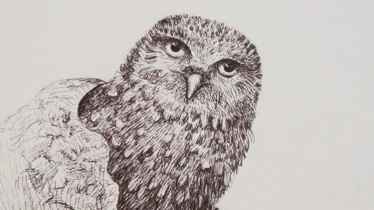 how to draw an owl with pen youtube