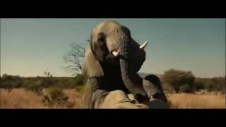 Вечеринка слонов.