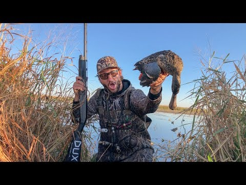 Public Land Walk In Solo Marsh Duck Hunt!!