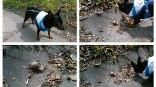 Spacer z psem i spotkaliśmy ślimaki