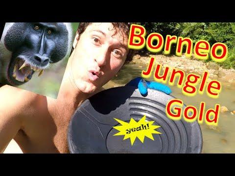 Found GOLD deep in the Jungles of BORNEO