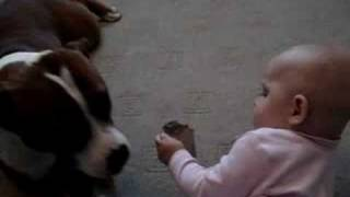 Staffordshire Bull Terrier And Baby