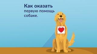 Важно! Что делать, если собаке плохо. 6 Простых приемов