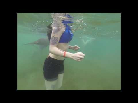 Swimming With Dolphins - Roatán, Honduras 2017