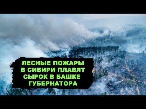 Кто виноват в пожарах в Сибири?