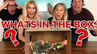 "Download 💩GROSS💩WHAT""S IN THE BOX CHALLENGE (LIVE ANIMALS) WITH REBECCA ZAMOLO AND MATT SLAYS