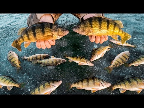 JUMBO Perch CATCH And COOK!!! (Ice Fishing)