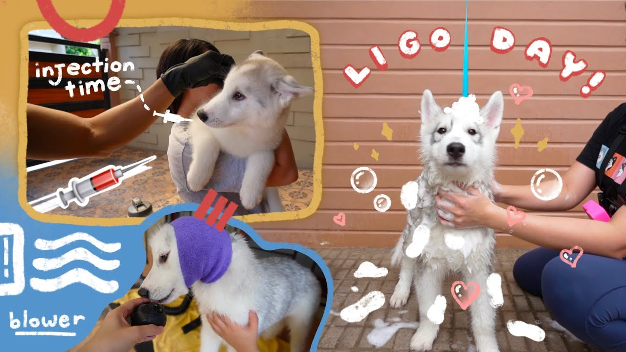 LAST 5 IN 1 VACCINE NA NG MGA BIIKS + LIGO DAY!!