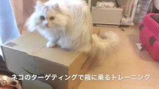 東京都墨田区・江東区を中心に活動するペットシッターサービスです。 中...