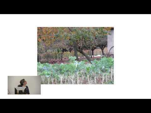 Scholar-in-Residence: Beebe Bahrami - Café Oc: A Travel Memoir of Southwestern France