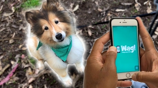 If you need extra cash and love hanging out with dogs, on-demand do...
